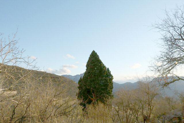 کهنسالترین درختان درکدام استان کشور است؟