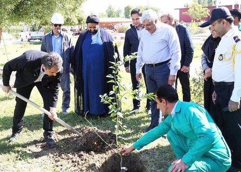 درخت کاری در شرکت پالایش گاز بیدبلند خلیجفارس