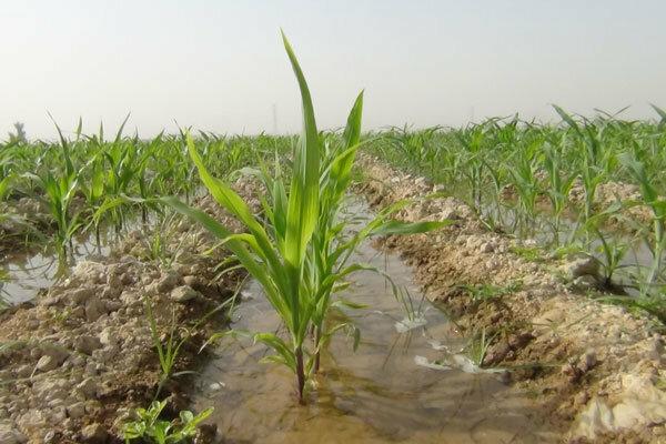 کشاورزان عنصر نجات بخش آب ایران