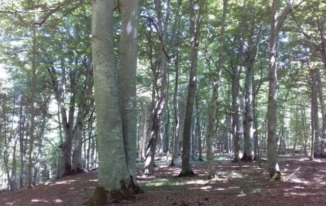 تاثیر مدیریت پایدار جنگلهای شمال بر محیط زیست