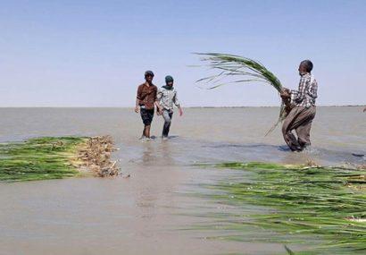 پهناورترین استان کشور بعد از 20 سال خشکسالی احیا شد
