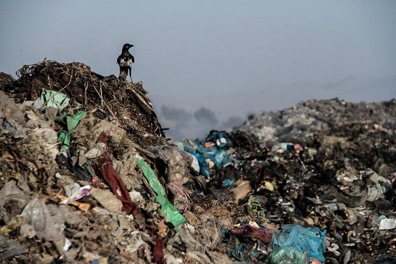 قاچاق زباله ادامه دارد