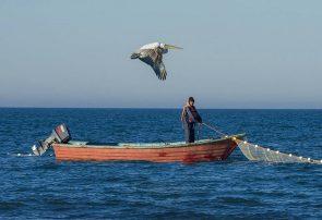 مزایای کرونا بر دل زیست دریا