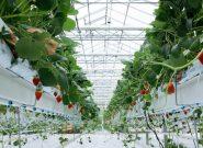 سلامت محیط زیست با کشت گلخانه ای هیدروپونیک