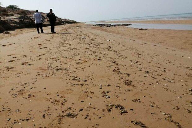 آلودگی ساحل گناوه به لکههای نفتی