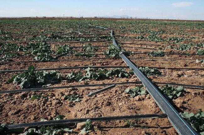 کمک به محیط زیست با اجرای آبیاری نوین در اراضی البرز