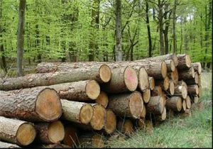 چراغ سبز وزیر به خصوصیسازی جنگل