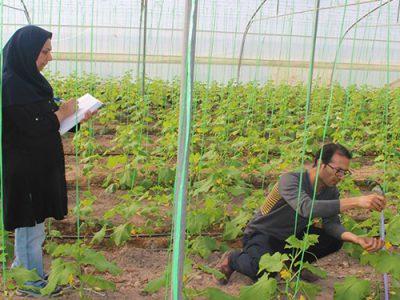 خاموشی برق نگرانی گلخانه داران خراسان شمالی در فصل جدید کاری