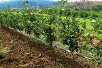 قطع برق، یک چهارم باغات را سرگردان کرد/وقتی زور وزارت نیرو به کشاورزی رسید!