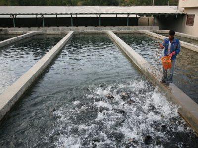 ۲۵ هزار تن آبزی امسال در استان کرمانشاه تولید میشود