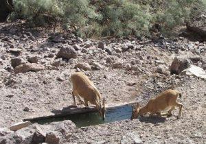 گونههای جانوری را در خشکسالی امسال دریابیم