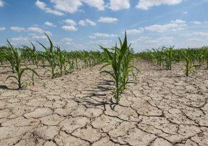 خسارت خشکسالی به بخش کشاورزی ۶۷ هزار میلیارد تومان برآورد شد