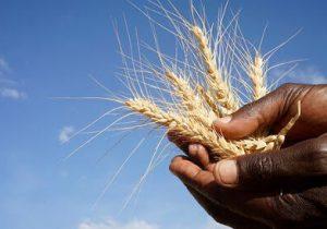 خشکسالی با کشاورزی کردستان چه کرده است؟