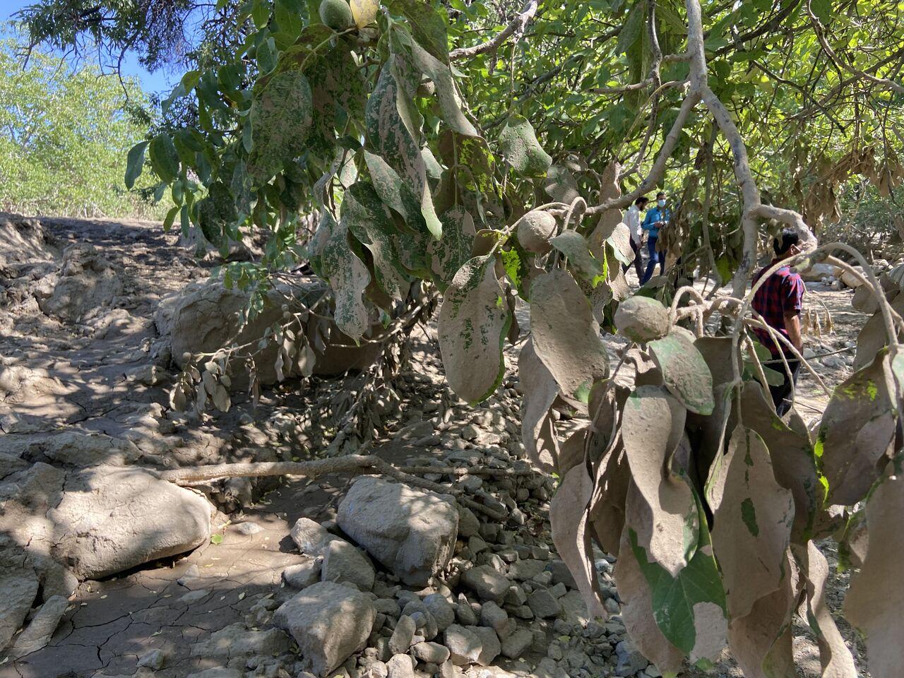 خسارت سیل در جیرفت ۲۴ میلیارد تومان اعلام شد