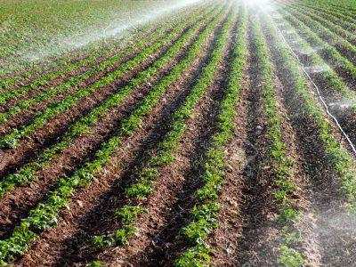 از طرحهای سازگاری با کمآبی دیار خشک کریمان چه خبر؟